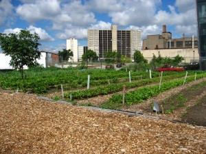 north_view_of_a_chicago_urban_garden