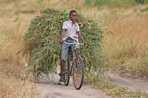 Bikes For Africa africa bike Every year
