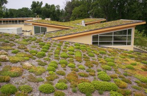 greenroof