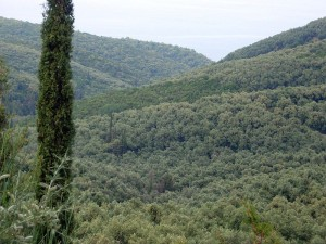 800px-forests_near_parga