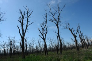 dead_forest_near_lagodekhi_2