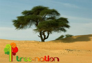 tree_nation