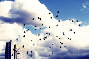 bird-migration